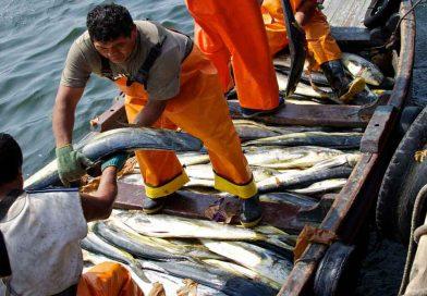 Pesca: crecerá la exportación, pero no el consumo interno